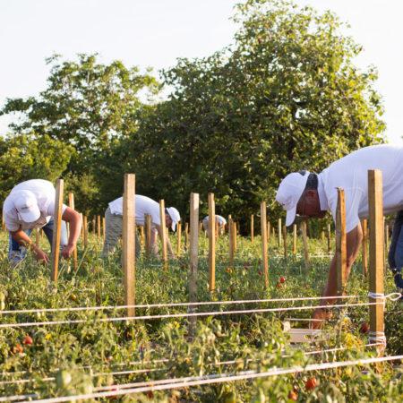 antica-trochlea-Azienda-agricola-pomodoro-del-piennolo-del-vesuvio-dop-gallery-chi-siamo-15