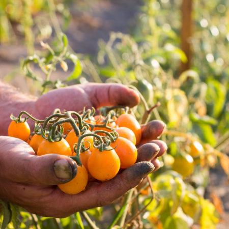 antica-trochlea-Azienda-agricola-pomodoro-del-piennolo-del-vesuvio-dop-gallery-chi-siamo-17